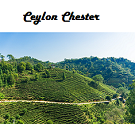 Ceylon Chester Broken Orange Pekoe Black Tea