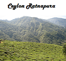 Ceylon Ratnapura Orange Pekoe Special Black Tea
