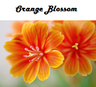 Orange Blossom Spice Flavored Tea