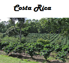 Costa Rica Reserve Coffee