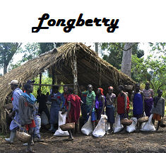 Ethiopia Longberry Coffee