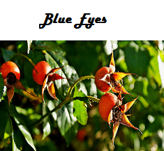Blue Eyes Flavored Herbal Tea