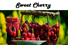 Sweet Cherry Flavored Tea